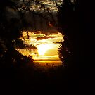 Sunrise Through The Trees by Evita