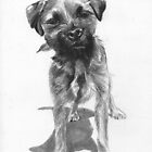 Alfie  Border Terrier by Ally Tate