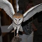 SHOW OFF Barn Owl by leunig