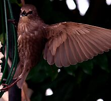 Bird On A WING by snapdecisions