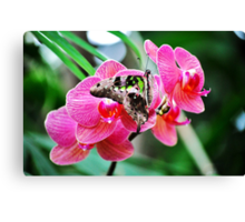 Pink Orchids & Butterfly Canvas Print