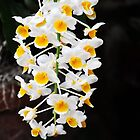 Blossoming Abundance Orchids by exoticflowing