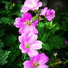 Wild Cranesbill by Rewards4life