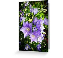 Bellflowers Greeting Card