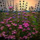 Field Mint - Wildflowers by Charles &amp; Patricia   Harkins ~ Picture Oregon