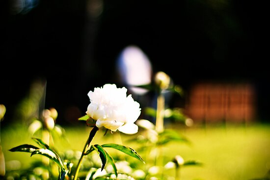 The Flower. by tutulele