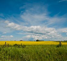 Summer Colors of the Prairies by Kerri Gallagher