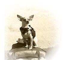 Chihuahua and the Kayak Adventure Photographic Print