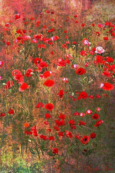 Poppies on the Verge by Linda Lees