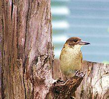 The Butcher Bird. by Liza Barlow