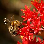 Bee on scarlet paintbrush by Celeste Mookherjee
