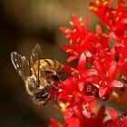 Bee on scarlet paintbrush by Celeste Mookherjee