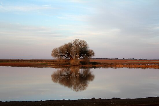 Single Tree reflection by Qnita