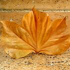 Golden Leaf  by The Creative Minds