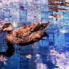 Urban Duck by Misa Kobayashi