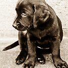 Portrait of a Puppy by Nancy Stafford