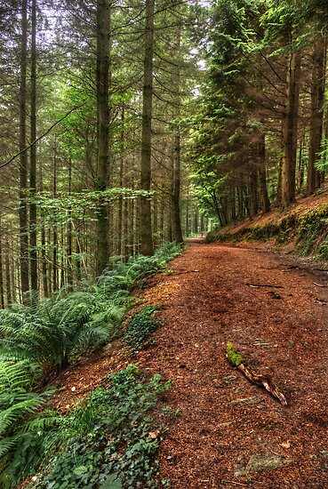 Cardinham Woods path by M G  Pettett