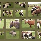 Shetland Pony Collage by Sherri Fink