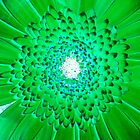 Green Gerbera  by ©The Creative  Minds