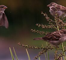 Baby Sparrows by snapdecisions