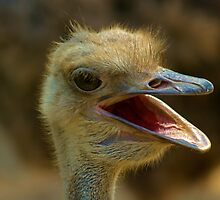 Ostrich, Chiang Mai Zoo, Thailand by bulljup