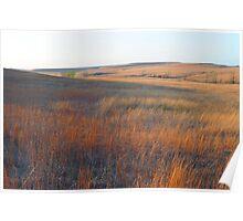 Tall Grass Prairie - Kansas Poster