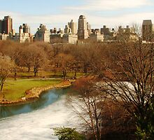 Winter in Central Park by michael6076