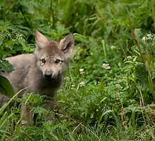 Youth in the Forest by Tracey  Dryka