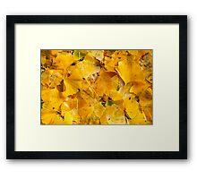 Ginkgo biloba leaves Framed Print