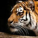 Crouching Tiger by David Lampkins