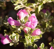 Busy Little Bee by Timothy L. Gernert