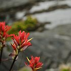 Indian Paintbrush Bokeh 3 by Michael Garson