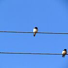 Birds sitting on wire by Shiju Sugunan