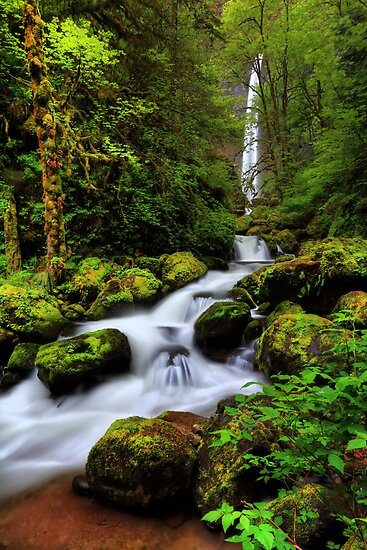 Elowah Falls I by Tula Top