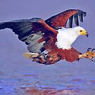 Eagle Strike by Jerry L. Barrett