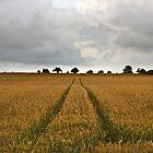 Country Field by Nicholas Jermy