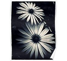 Chrome Daisies Poster