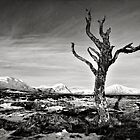 Dead Tree, Rannoch Moor, Scotland by Mark Smart
