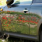 Poppies reflected in the side of a mini by Nik Taylor