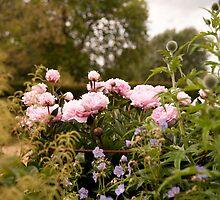 Peonie, Geranium, Astilbe, Echinops by Christopher Cullen