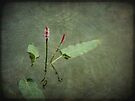Water Flower by Lucinda Walter