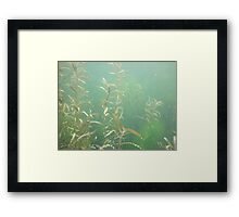 Descending Weed Basin Framed Print