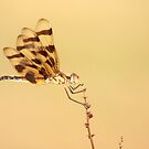 Halloween Pennant Dragonfly by SusieG