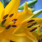 yellow lily stamen details by LisaBeth