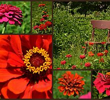 Zinnias in Bloom by Sheryl Gerhard