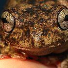 Peron's Tree frog! by KiriLees