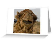 Camel close-up Greeting Card