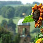 Sunflower by JaxHunter
