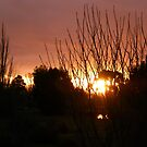 Campbell Town Dusk by DEB CAMERON