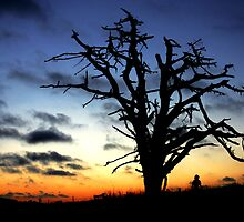 The Witch's Tree by AshWarren